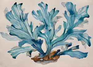 Blue Coral Imagined